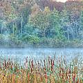 Misty Morning by Deborah Smolinske