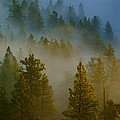 Misty Morning In The Pines by Ben Upham III