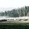 Misty Morning In Yosemite by Jane Rix