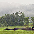 Misty Morning Ride by Joan Davis