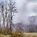 Misty Morning by Season Bonner