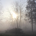 Misty Morning by Sharon Wilkens