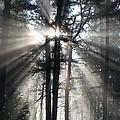 Misty Morning Sunrise by Crista Forest