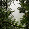 Misty Mossy Morning by Lisa Knechtel