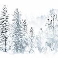 Misty Mountain by Susan Eileen Evans