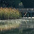 Misty Pond by Jane Luxton