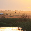 Misty Southern Indiana Sunset by Diane Merkle