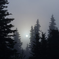 Misty Sunrise by Carol Beverly
