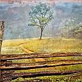 Misty Tree by Debra and Dave Vanderlaan