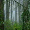 Misty Woodland by Louise Heusinkveld
