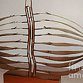 Mitotic Spindle by Franco Divi