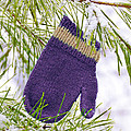 Mitten In Snowy Pine Tree by Jill Battaglia