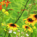 Mixed Flowers Bloom In A Garden by Robert L. Potts