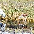 Mixed Group Of Shore Birds by Robert Floyd
