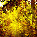 Yellow Forest by Joel Zimmerman