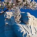 Mlk Memorial Framed By Cherry Blossoms by Bill Jonscher