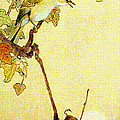 Mockingbird 1890 by Padre Art