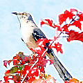 Mockingbird In The Leaves - Watercolor by Kerri Farley