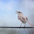 Mockingbird In The Snow by Jai Johnson