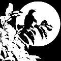 Mockingbird Moon by Betty Northcutt
