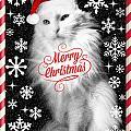 Mod Cards - I'm A Star Baby I'm A Christmas Star - Merry Christmas by Aurelio Zucco