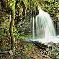 Mohawk Falls At Ricketts Glen by Adam Jewell
