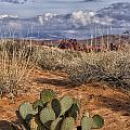 Mojave Desert Cactus by Debby Richards