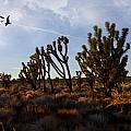 Mojave Desert Joshua Tree With Ravens by Evie Carrier