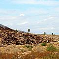 Mojave Desert Landscape by Ben and Raisa Gertsberg