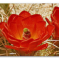 Mojave Mound Cactus Art Poster - California Collection by Ben and Raisa Gertsberg