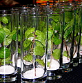 Mojitos In The Making by Karen Wiles