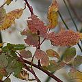 Molting Leaves  by Brent Dolliver