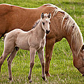Mom And Foal by Donna Doherty