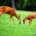 Mom Sharing A Snack With Her Baby Fawn by Peggy Franz