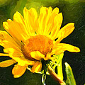 Moment In The Sun - Golden Flower - Northern California by Mark E Tisdale
