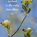 Moment In Time by Maria Urso