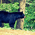Momma Bear by Jan Dappen