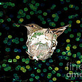 Mommy Hummingbird In The Nest by Mariola Bitner