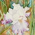 Mom's Iris by Mary Benke