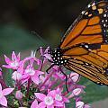 Monarch 2 by Leah Palmer