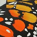 Monarch by Aliya Michelle