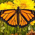 Monarch Batik by Alice Cahill
