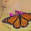 Monarch Beauty by Pam  Holdsworth