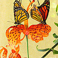 Monarch Butterflies by Safran Fine Art