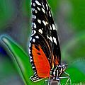 Monarch Butterfly by Dawn Gari