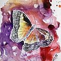 Monarch Butterfly by Derek Mccrea