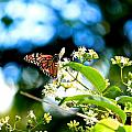 Monarch Butterfly I by Michael Saunders
