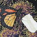 Monarch Butterfly On White Tulip by Lynda K Boardman