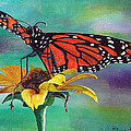 Monarch Butterfly by Patricia Pasbrig