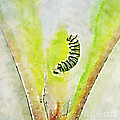 Monarch Caterpillar - Digital Watercolor by Kerri Farley